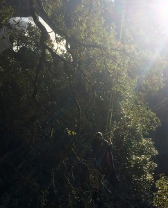 tree_landing