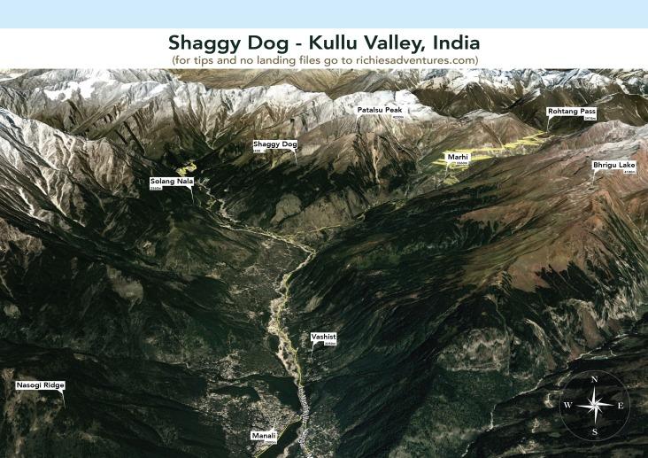 shaggy_dog-01